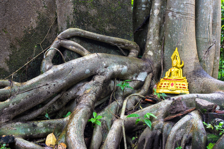 overwhelm: Golden buddha on tree roots overwhelm ancient temple walls, Sangkhlaburi, Kanjanaburi, Thailand