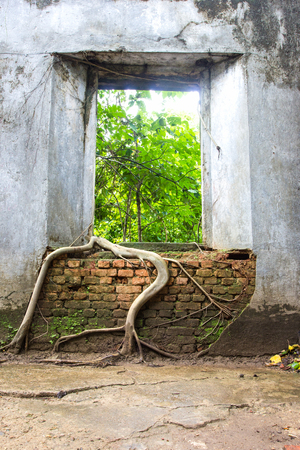 overwhelm: Tree roots overwhelm ancient temple walls, Sangkhlaburi, Kanjanaburi, Thailand
