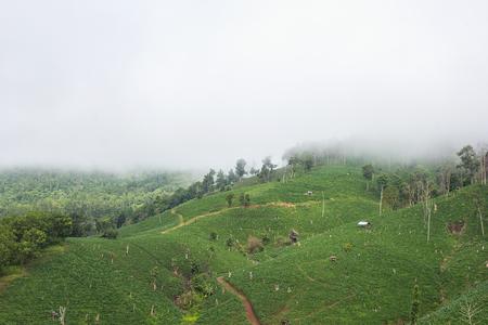 lurid: Mountain fog  in Chaingmai province, Thailand