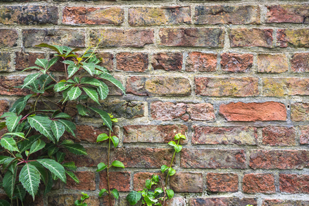 Little plant on ancient red bricks wall 스톡 콘텐츠
