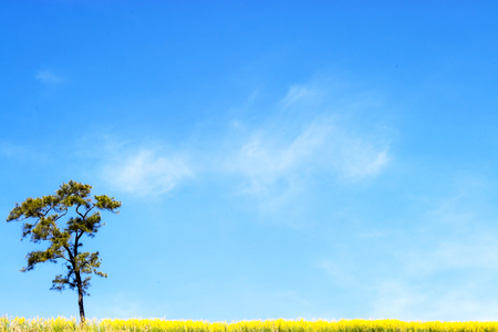 vacant land: fields flowers, trees and blue sky. Stock Photo