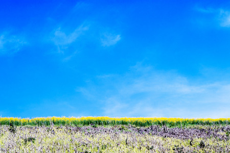 vacant land: fields flowers and blue sky.