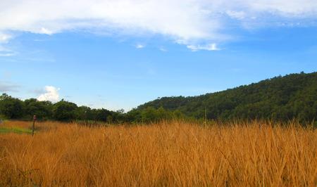 herbicide spray on dry grass. Dry grass as background.