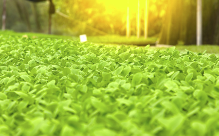 csr: Agriculture and Seeding Plant seed growing step concept.