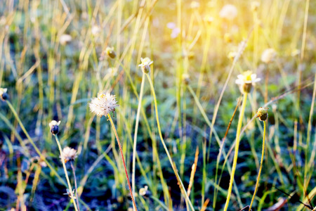 Vintage soft light tone and soft focus of abstract nature background with grass flower.