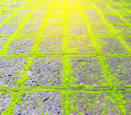 Green moss on old stone footpath. Stock Photo