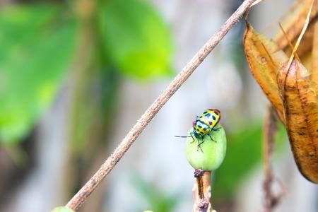 Close-up of green ladybug on leaf. Standard-Bild