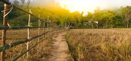 bamboo fence of animals farm, when the sun light pass.