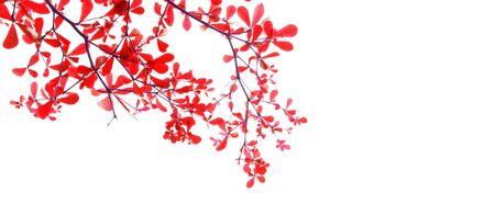 fresh leaf on white background.