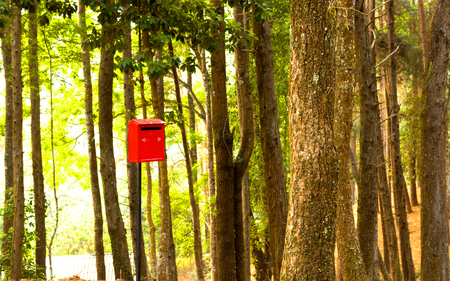 Red letterbox in green pine forest. Stock Photo