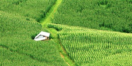 rural road and hut in corn fields on mountains. Nature green fields in rainy season Фото со стока
