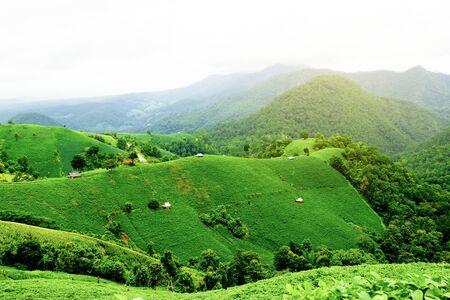 rural road in soy bean fields on mountains. Nature green fields in rainy season