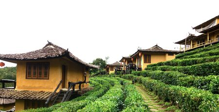 Ban Rak Thai, a Chinese settlement in tea field with fog in the morning, Mae Hong Son, Thailand.
