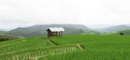 Green Terraced Rice Field in Pa Pong Pieng , Mae Chaem, Chiang Mai, Thailand. Stock fotó