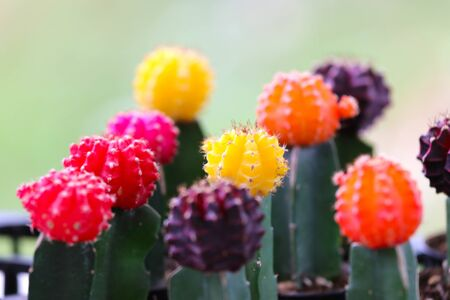 Colorful of beautiful cactus or succulents in the pot pattern background. selective focus.