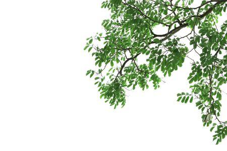green leaf on white ground.