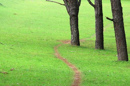 Walking in a green lawns and pine forest