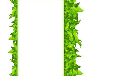 leaves frame: Marco de hojas aisladas en blanco