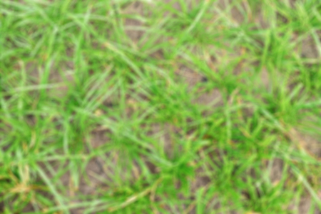grew: Blurred short plants are grew on ground scatteringly