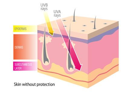 uv: UV skin Illustration