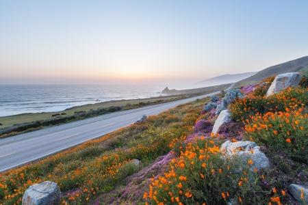 sur: wild flowers along California coastline, Big Sur, CA Stock Photo