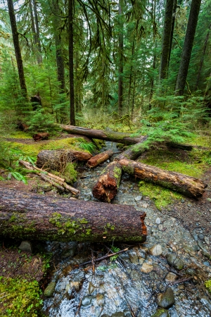 nature photography: large log in rain forest