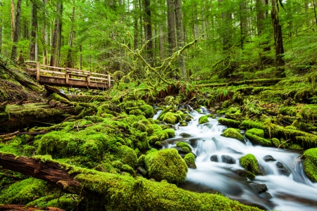 sol duc river: Beautiful cascade waterfall in Sol Duc falls trail, national park, WA, US Stock Photo