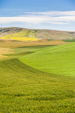 agriculture field in rural area of Washington state  photo