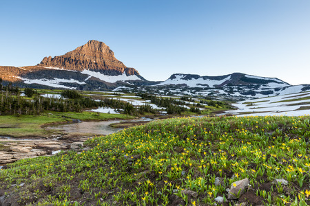 reynolds: Glacier National Park - Reynolds Mountain and wildflower field at Logan Pass