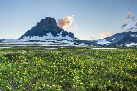reynolds: Glacier National Park - Reynolds Mountain over wildflower field at Logan Pass Stock Photo