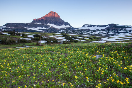 reynolds: Wildflower field at Logan Pass, Glacier National Park