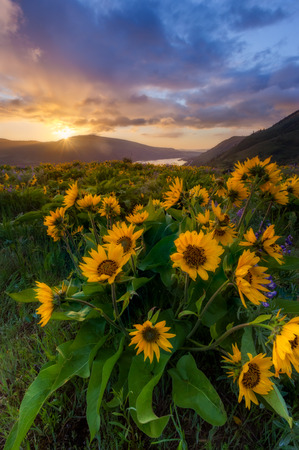 viewpoint: beautiful sunrise and wildflowers at rowena crest viewpoint, Oregon. Stock Photo