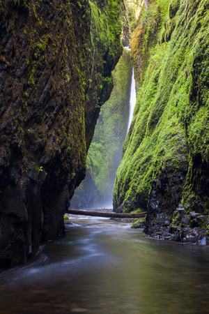 gorge: Oneonta falls in Columbia river gorge, Oregon.