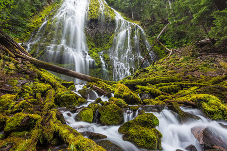 proxy falls: Beautiful proxy falls in Oregon national forest.