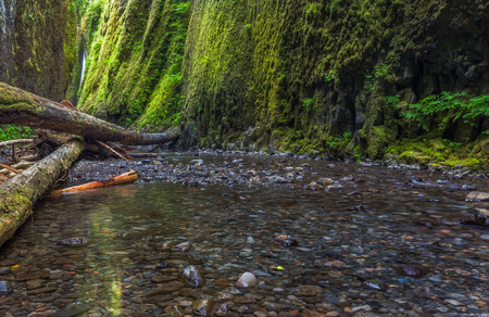gorge: Oneonta gorge trail in Columbia river gorge, Oregon