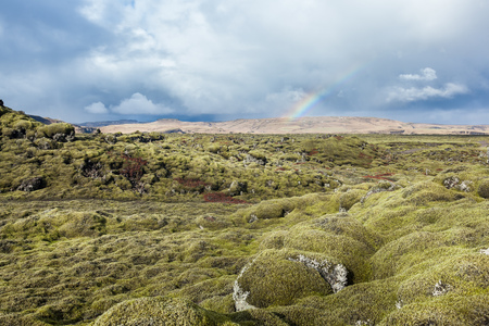 moss: large filed of lava rocks covered with moss in Iceland. Stock Photo