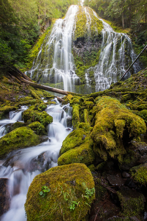 proxy falls: proxy falls and mossy logs in Oregon.