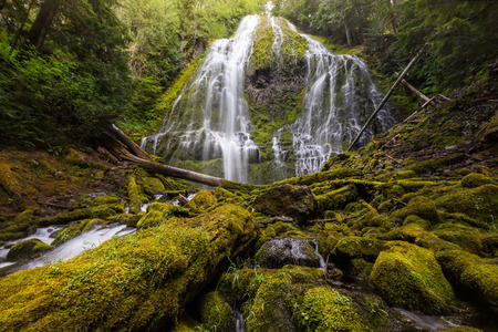 proxy falls: proxy falls in oregon rain forest