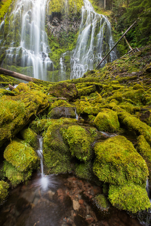 proxy falls: proxy falls in oregon rain forest.