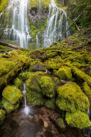 proxy falls: proxy falls in oregon rain forest.
