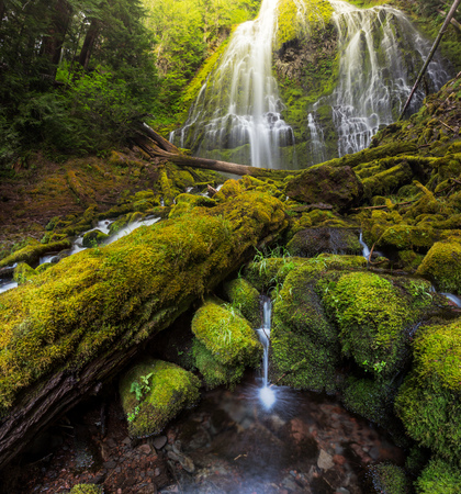proxy falls: Beautiful Proxy falls in mist, Oregon
