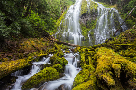 proxy falls: Proxy falls in Oregon forest.