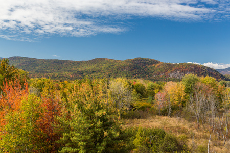 feuille arbre: White mountain National forest in autumn, New  Hampshire. Banque d'images