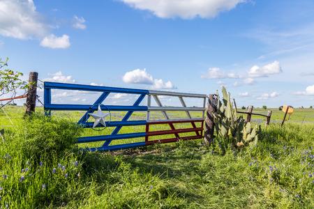 bluebonnet field in countryside  of Ennis, Texas