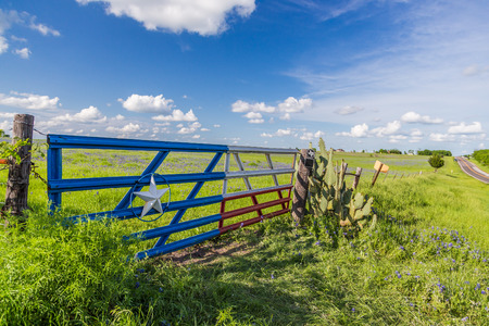 bluebonnet field and blue sky in Texas countryside