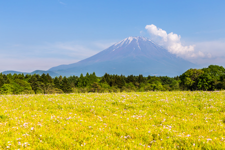 Mount Fuji san in cear day with green grass foreground Stock Photo