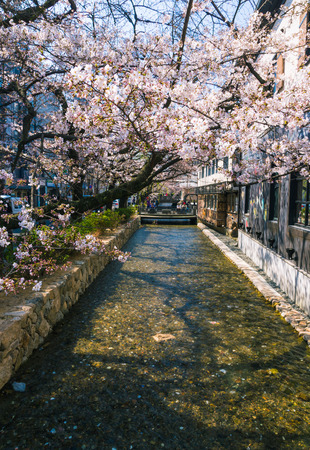 Takase River, the famous spot to view Cherry blossom or sakura in Kyoto, Japan. Stock Photo