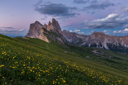 Stunning view of Dolomite mountain and wildflower field in summer at Seceda peak, Italy