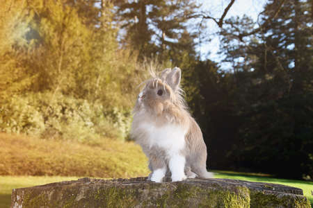 lionhead: Cute bunny sitting in the park