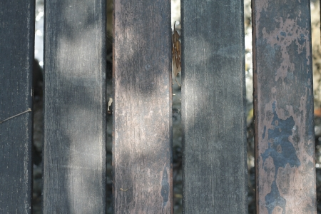 Wood of texture